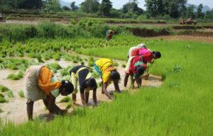 organic-farming-orissa