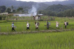 Assam's agri business