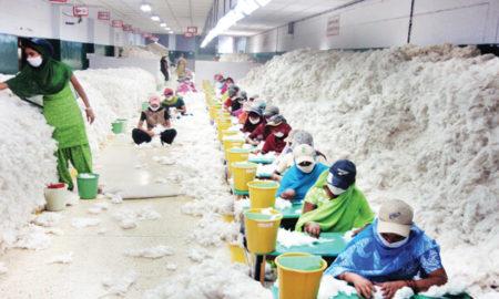 Cotton & Agro Marketing