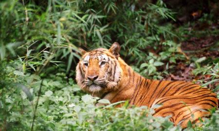 BANGLADESH A Treasure Trove of Biodiversity