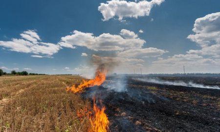 Stubble Burning Issue