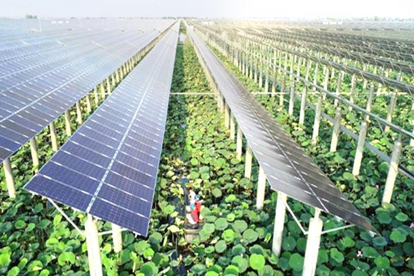 MPD-41 promotes solar farms and urban farming as 'green economies'